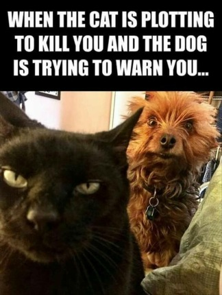 When the cat is plotting to kill you and the dog is trying to warn you.